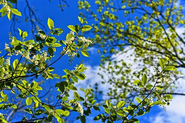 Tree, Branch, Blossom, Flowering Tree, Spring Bloom