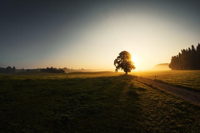 Sunrise, Fog, Tree, Grass, Fisheye