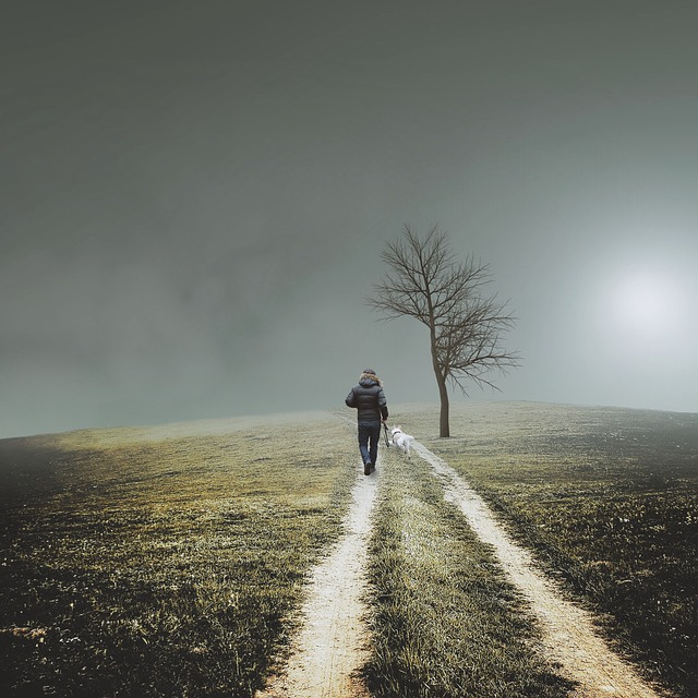 Trail, Man, Dog, Tree, Fog, Walking, Hike