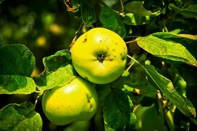 Apple, Apple Tree, Fruit, Tree, Close, Nature, Food
