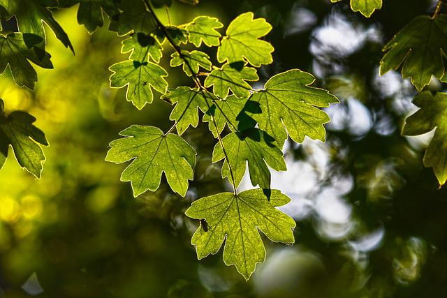 Leaves, Foliage, Branch, Tree, Forest, Overhead, Vein