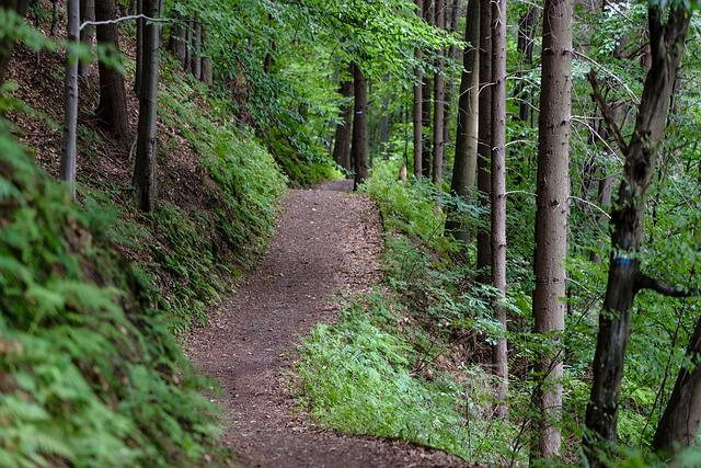 Forest, Tree, Hiking Trail, Forest Road, Lumberjack