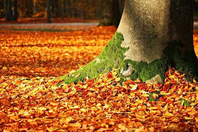 Fall Foliage, Moss, Tree, Autumn, Leaves, Forest, Log