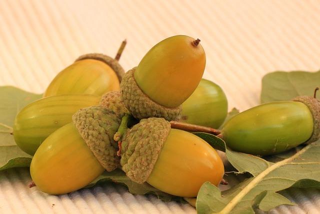 Acorns, Oak, Autumn, Oak Leaves, Nature, Tree Fruit