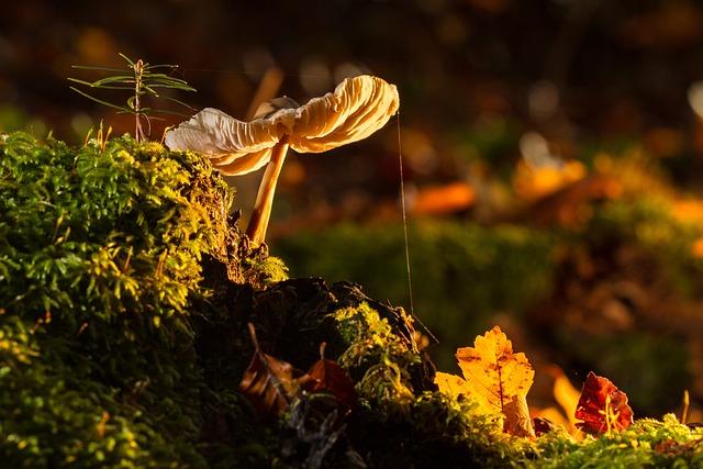 Mushroom, Moss, Tree Fungus, Wood Fungus