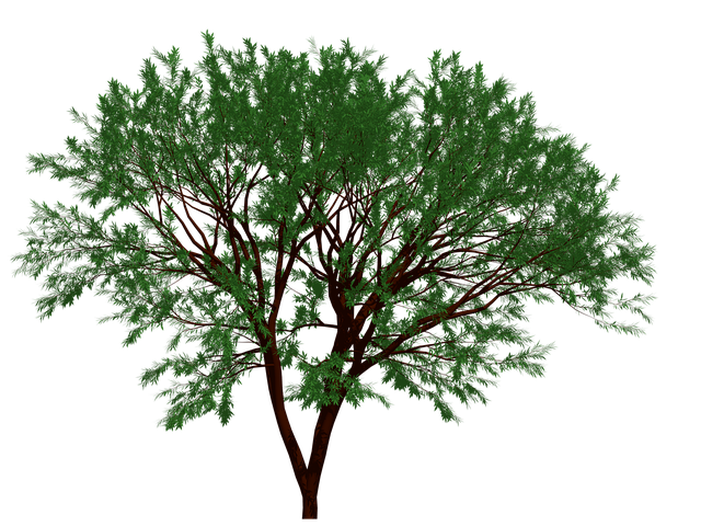 Tree, Nature, Garden, Forest, Leaf, Leaves, Natural