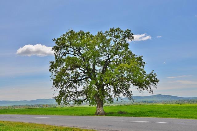 Tree, Mountain, Natur, Landscape, Green, Summer, Grass