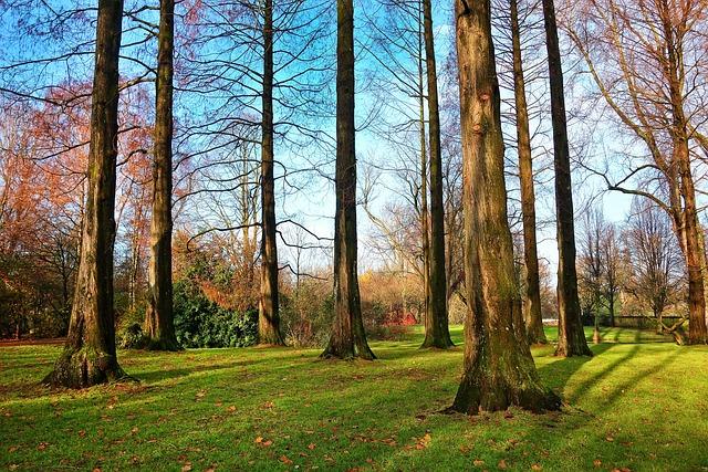 Tree, Pine Tree, Trunk, Slender, Park, Grove, Grass