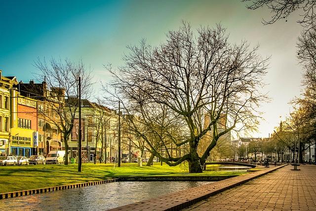 Rotterdam, Green, Tree, Sunlight, Colors, Plant