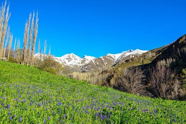 Nature, Flower, Chan, Spring, Grass, Green, Flora, Tree