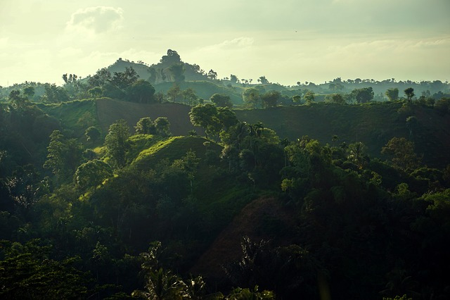 Landscape, Hill, Green, Morning, Forest, Tree, Outdoor