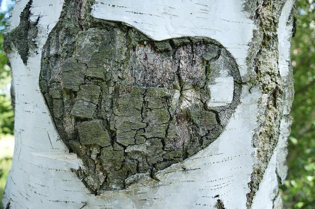 Birch, Tree, Bark, Heart, Love, Promise, Old