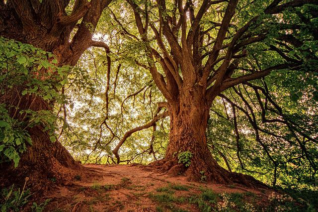 Tree, Hill, Nature, Leaves, Landscape, Wood, Forest