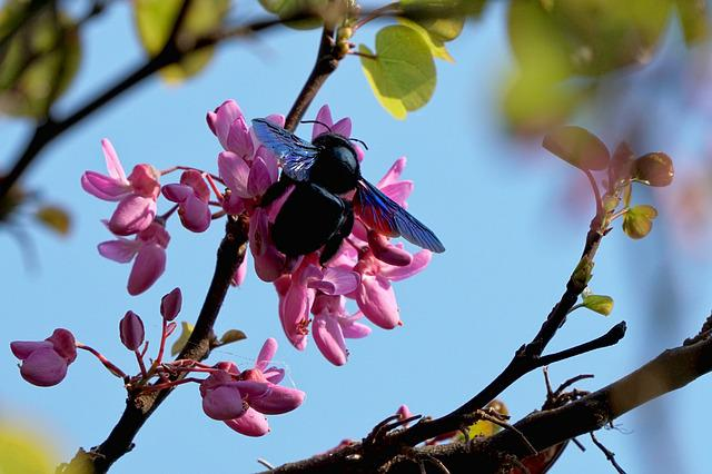Tree, Spring, Nature, Flowers, Plant, Insect