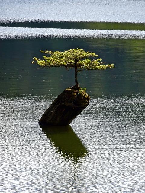 Tree, Isolated, Bonsai, Botany, Plant, Small, Miniature