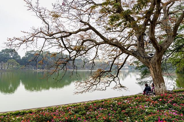 Lake, Ha Noi, Vietnam, Tree, Morning, Beautiful, Flower