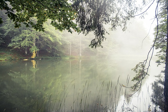 Fog, Lake, Water, Mirroring, Forest, Tree, Beech, Reed