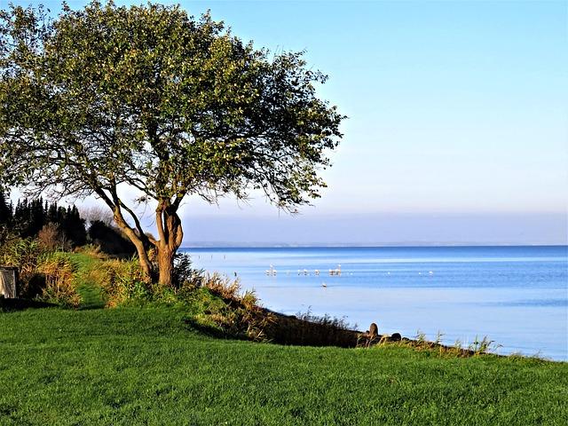 Baltic Sea, Denmark, Sea, Landscape, Tree, Quiet Lake