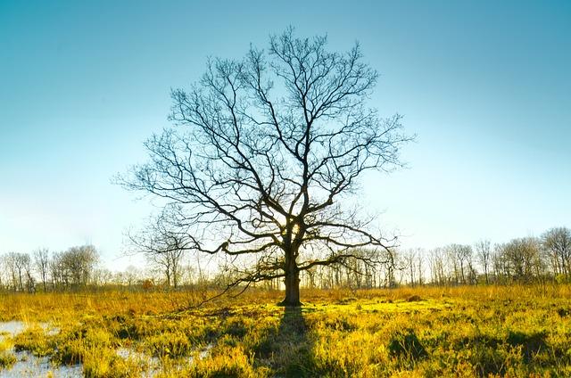 Landscape, Nature, Tree, Season, Outdoors, Panoramic