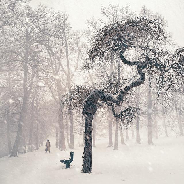 Tree, Winter, Snow, Person, Wintry, Snowy, Landscape