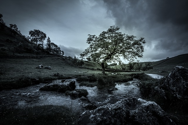 Tree, Stream, Mood, Moody, Nature, Water, Landscape