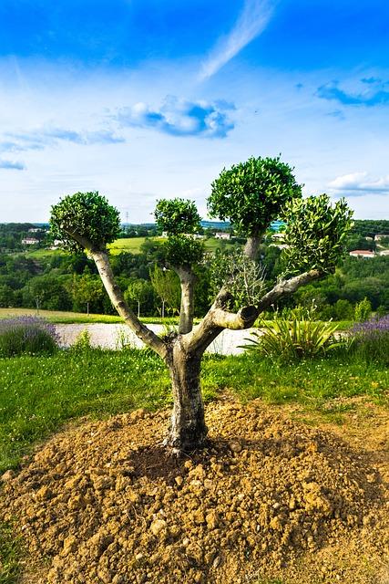 Tarn, Olivier, Tree, Nature, Landscape, Agriculture