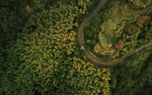 Uav, Forest, Tree, Landscape, Natural, Travel