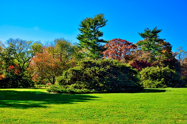 Planting Fields, Tree, Fall, Nature, Landscape, Lawn