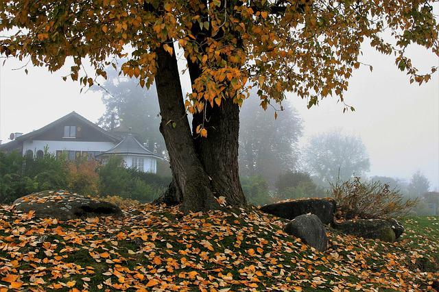 House, Park, View, Autumn, Tree, Leaf, Nature, Season