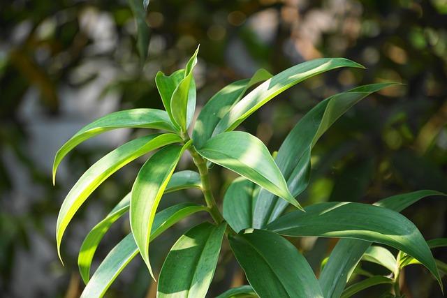 Leaf, Flora, Nature, Growth, Tree