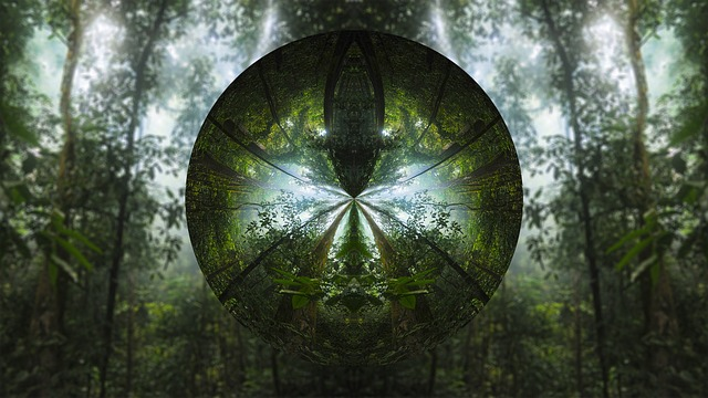 Tree, Circle, Lens, Forest