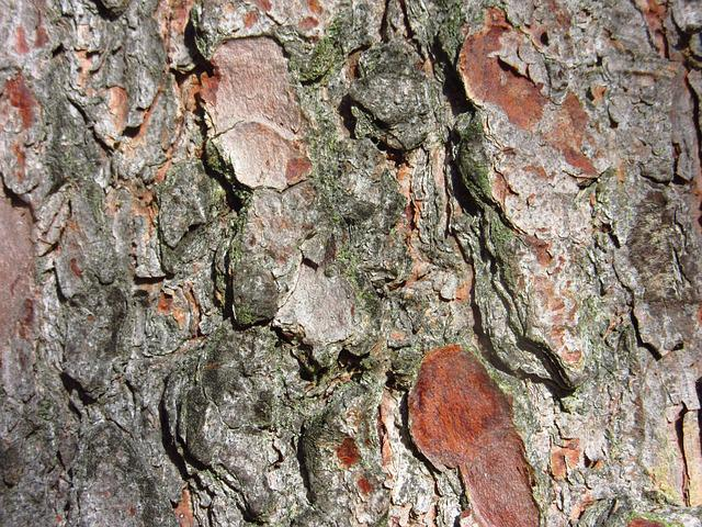 Pine Bark, Tree, Close, Conifer, Pine, Bark, Log