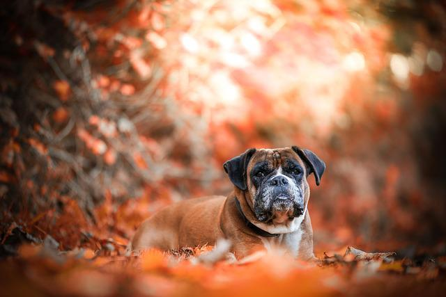 Autumn, Dog, Nature, Leaves, Forest, Lying, Tree