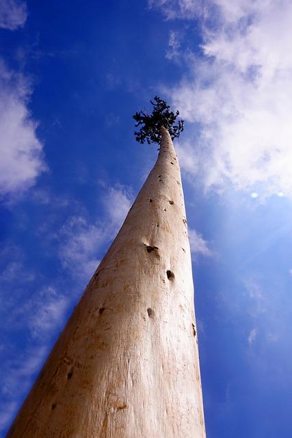 Sky, Tree, Maypole, Blue, Blue Sky