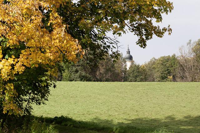 Autumn, Meadow, Mowed, Nature, Forest, Tree