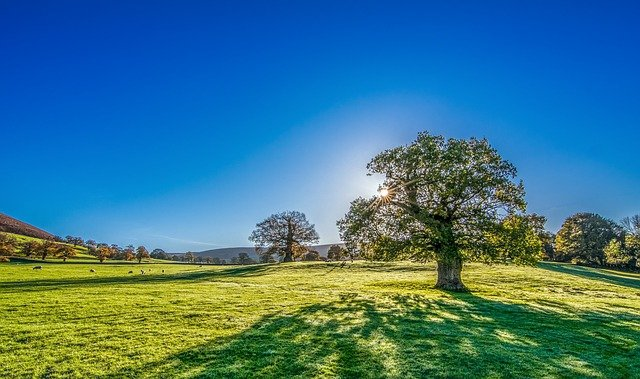 Tree, Sun, Sunshine, Summer, Meadow, Grassland