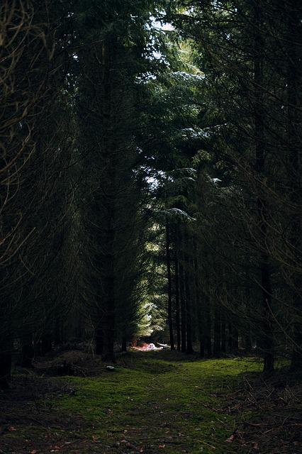 Forest, Moss, Green, Glade, Nature, Spring, Tree, Close