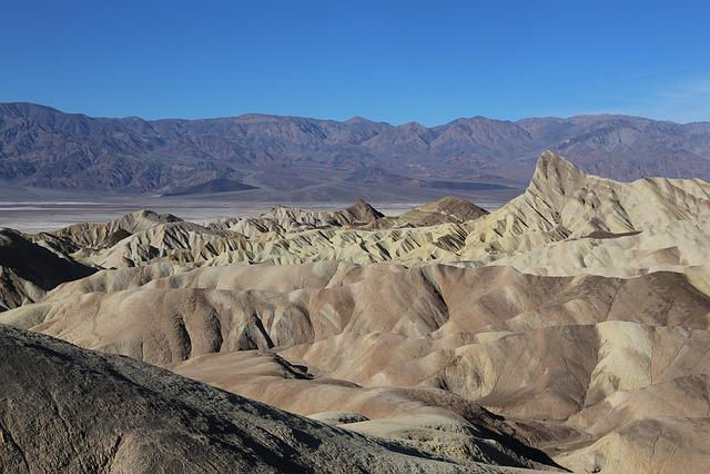 Death Valley, National Park, Dessert, Tree, California