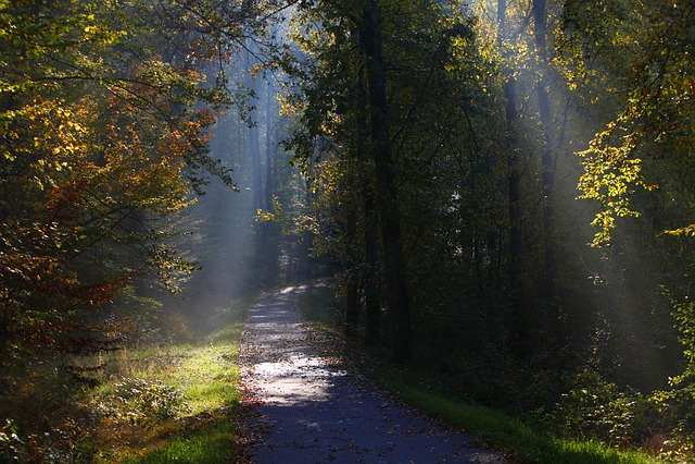 Wood, Tree, Autumn, Nature