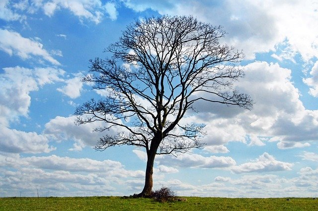 Tree, Blue, Sky, Branch, Branches, Clouds, Nature