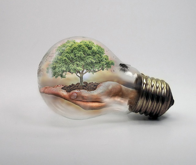 Bulb, Nature, Ecologycurrent, Climate Change, Tree