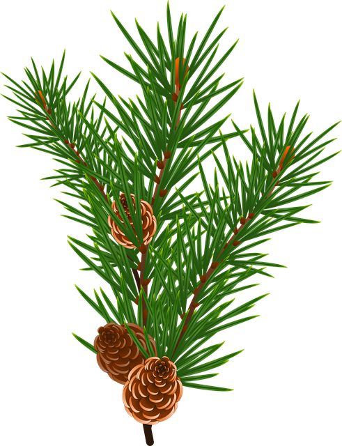 Branch, Floral, Green, Nature, Pine, Plants, Tree