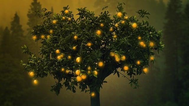 Magical, Orange, Tree, Nature, Landscape, Light