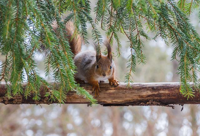 Tree, Squirrel, Animal, Nature Photo, Six, Nature