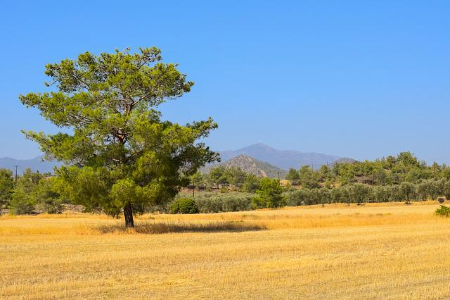 Tree, Landscape, Field, Nature, Forest, Summer, Scenery
