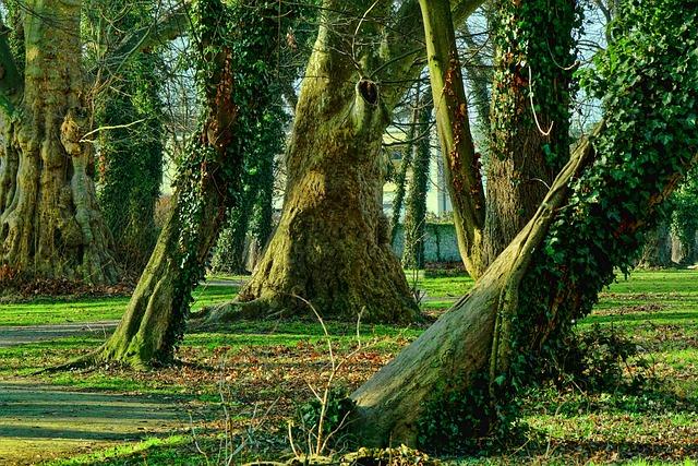 Nature, Tree, Wood, Landscape, Park