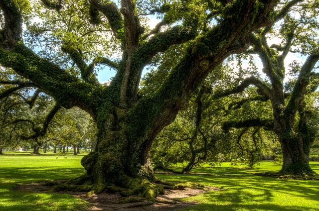 Oak Alley Plantation, Usa, America, Plantation, Tree