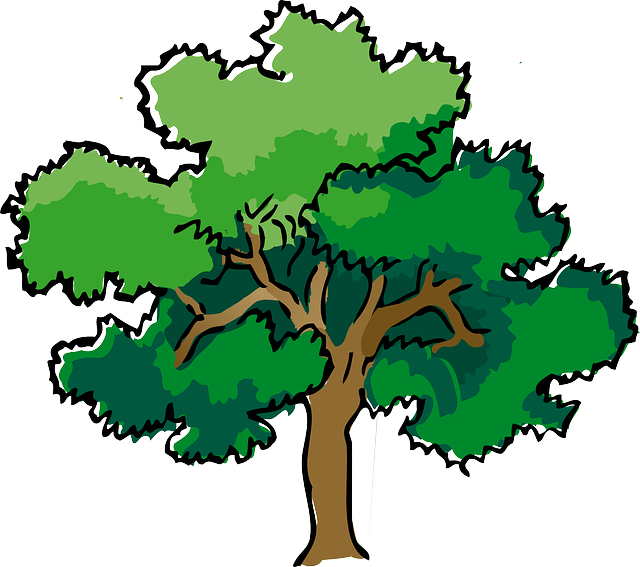 Oak, Tree, Summer, Branches, Leaves, Trunk, Mature