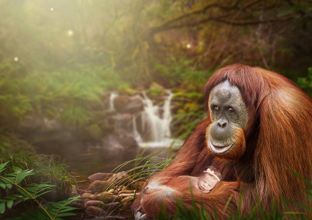 Photomontage, Orangutan, Baby, Waterfall, Tree, Forest