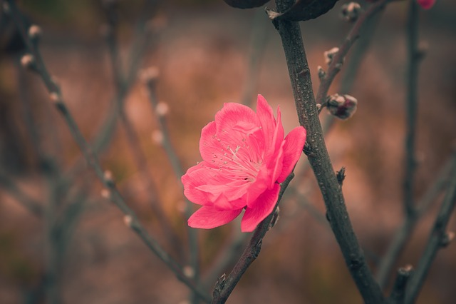 Flower, Nature, Flora, Outdoors, Tree